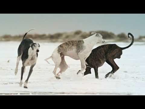 ▶ Turbostaat - Tut es doch weh (Official Video) - YouTube