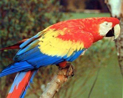 Simply Stunning! This beautiful red Macaw Parrot looking over his shoulder is a fantastic way to add a tropical touch to any home. This unique parrot art print poster looks very adorable and sure to catch every eye towards it. It will be a great gift for any bird lover. We offer durability and perfect color accuracy which keep long lasting beauty of the product.