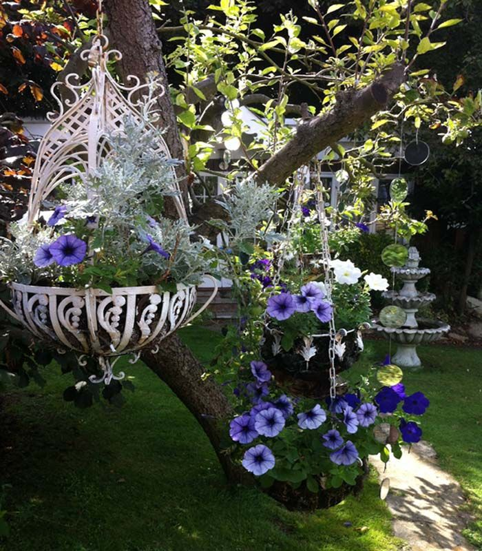 Hanging Flower Baskets Supplier : Mirrors and baskets with tumbling petunias hanging from an