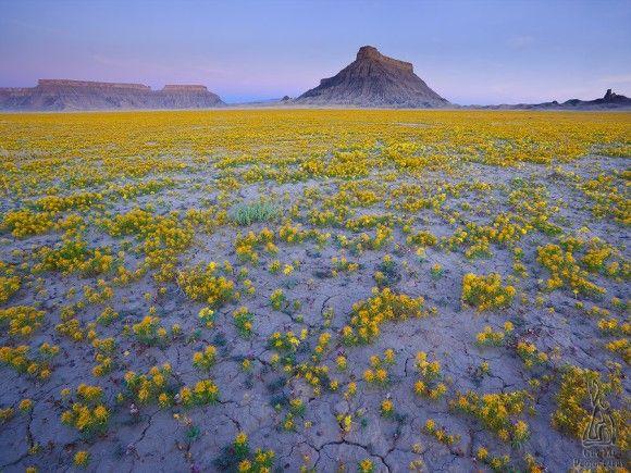 米ユタ州の国立公園内の砂漠地帯