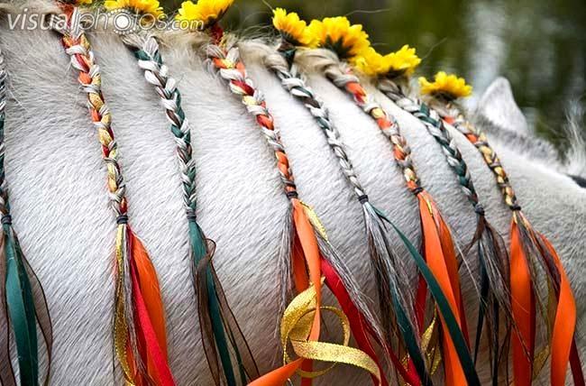 Horse mane Flower braids with ribbon | Horses | Pinterest ...