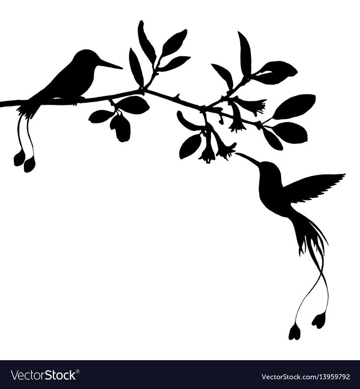 hummingbirds and flowers silhouettes, hand drawn flying birds and trees branches, isolated vector element. Download a Free Preview or High Quality Adobe Illustrator Ai, EPS, PDF and High Resolution JPEG versions.