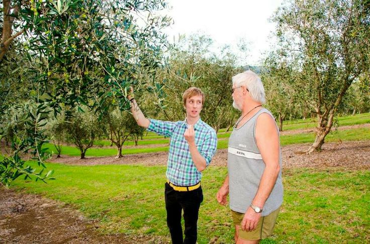 Up north in the farm learning from the best.  #olives #extravirgin #harvest #frank #drizzle