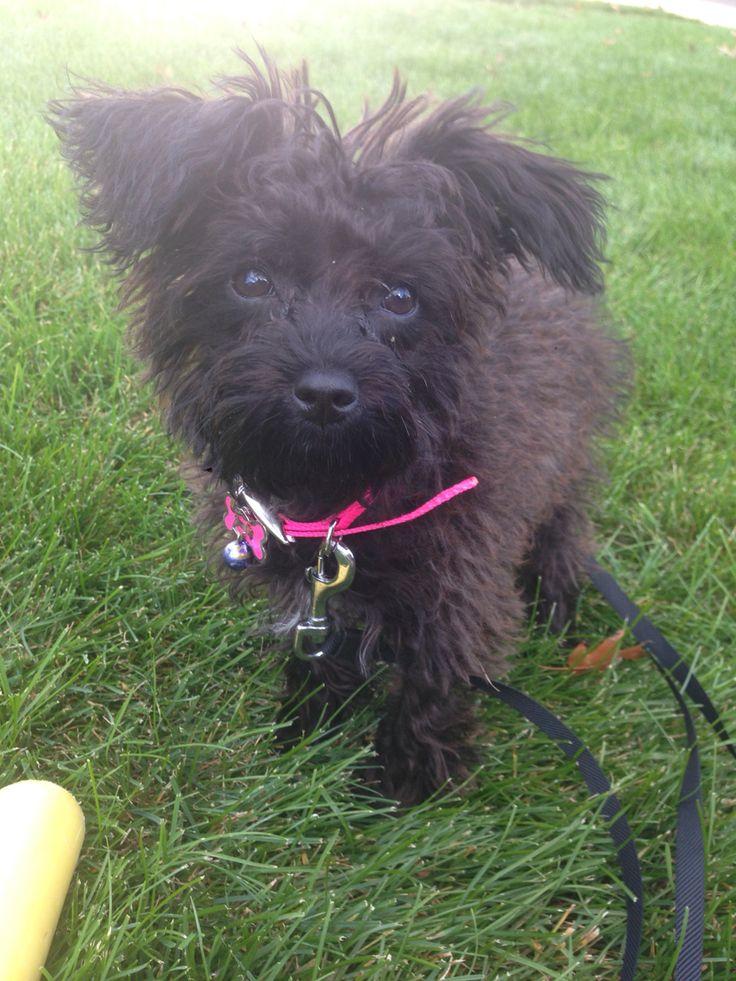 My perfect pup Nova ️ Pup, Puppies, Animals