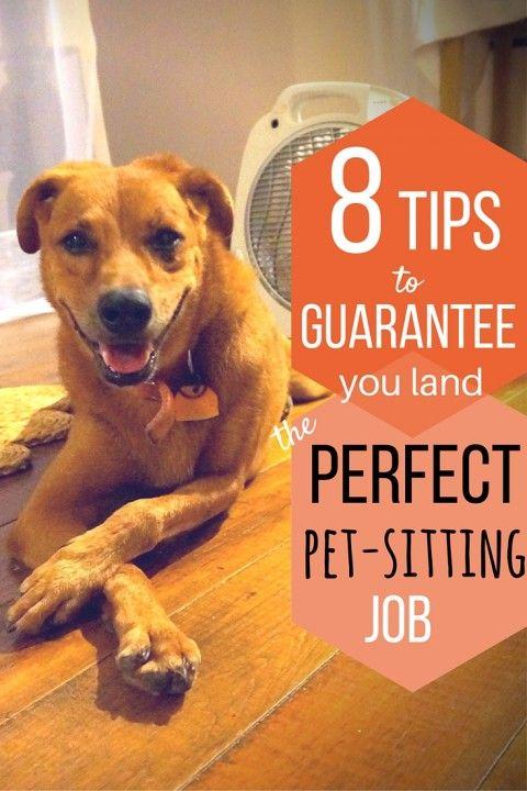 8 Tips to Guarantee You Land The Perfect Pet-Sitting Job