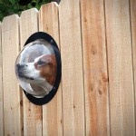 Pet Peek, A Fence Window Bubble For Curious Dogs