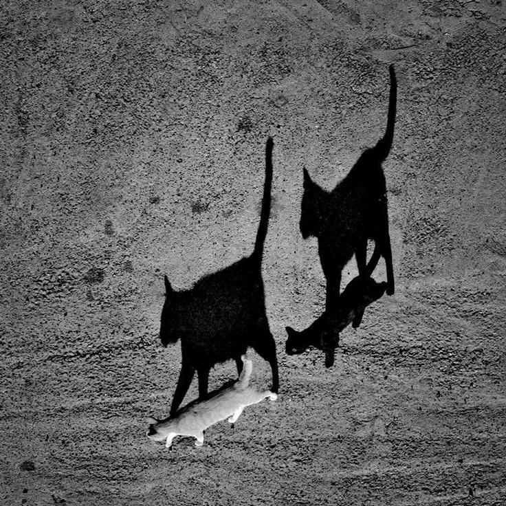 black cat, white cat  © sorin onisor