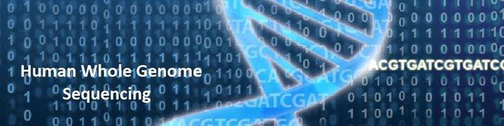 CD Genomics offers highly accurate, complete human whole genome sequencing service utilizing the Illumina HiSeq X Ten. With its unprecedented speed... http://www.cd-genomics.com/Human-Whole-Genome-Sequencing.html
