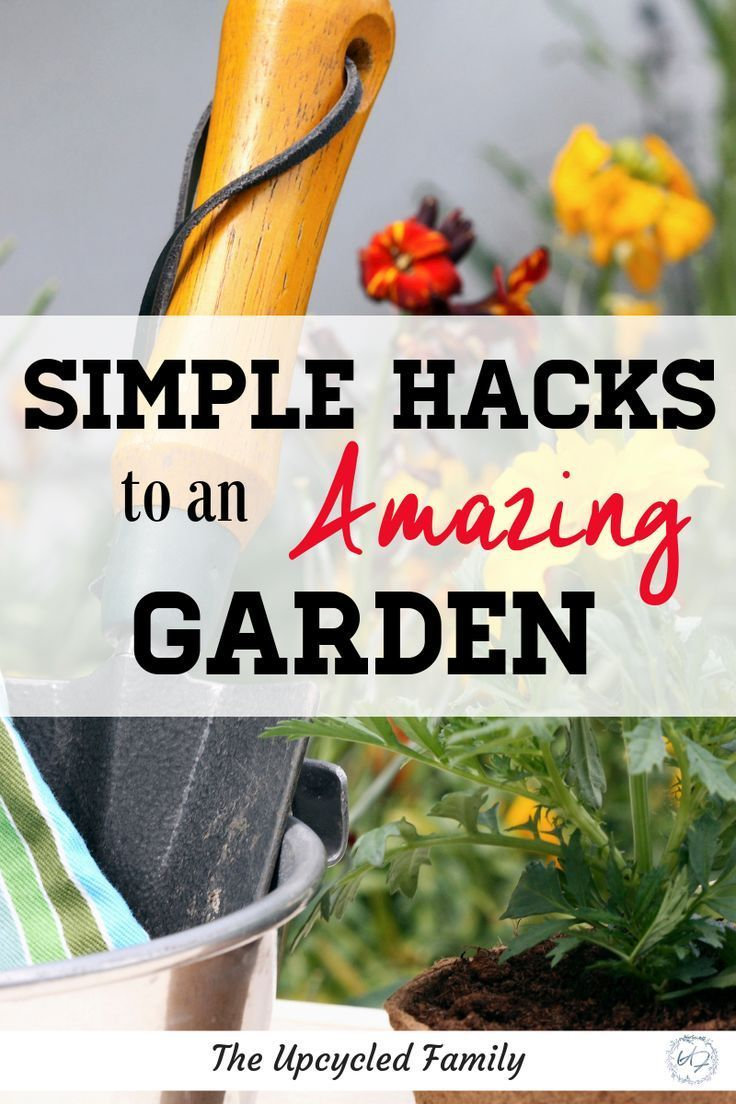 Simple Hacks To That Amazing Garden Organic Gardening As A Expert