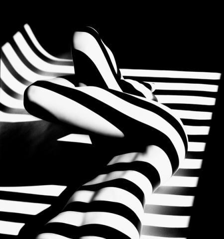 Photo Francis Giacobetti, Zebra, 1988