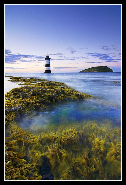 Love the seaweed - Lighthouse and Puffin Island at Penmon, Anglesey.