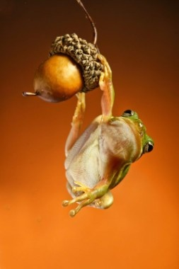 Animal Worlds / De Standaard Online - FOTO: Kikkers gekiekt