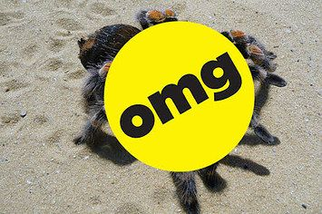 18 Creatures That Prove Your Nightmares Are Real