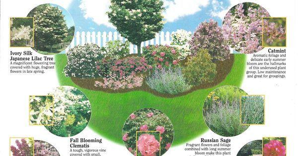 Fragrance Gardening: Japanese lilac tree, clematis, lilacs, summersweet, peonies, viburnum, mock-orange, roses, Russian sage, catmint