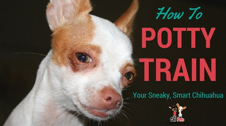 19 best images about dog training tips on pinterest for Dog potty training problems