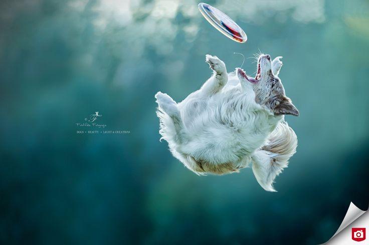 Hebbes! 😁 Foto van de Dag! Gefeliciteerd, Nuelle!   Bekijk meer hondenportretten van Nuelle op: http://nuelle.zoom.nl/