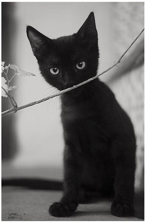 Sweet Black Kitty! Looks like Batman when he was a baby!
