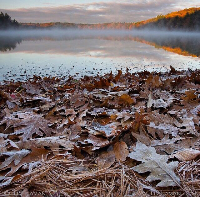 Walden Pond. Concord, Massachusetts