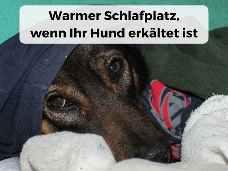 Warmer Schlafplatz, wichtig für #Hund mit #Erkältung #Ansteckend #Tröpfcheninfektion #Infekt