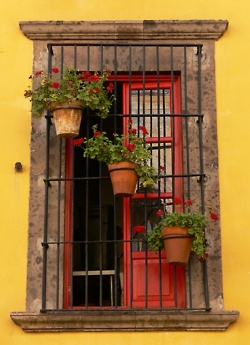 Gorgeous!: Plants Can, San Miguel, Red Doors, Miguel De, Yellow Wall, Window, Flowers Pots, Guanajuato Mexico, Red Geraniums