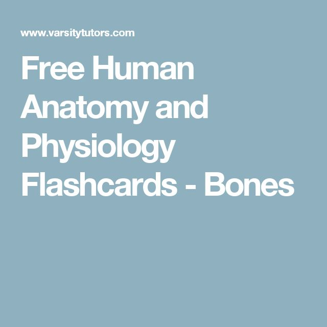Free Human Anatomy and Physiology Flashcards - Bones