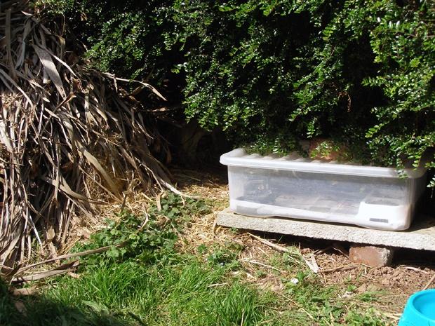 Building A Feeding Station - Cardiff Hedgehog Rescue