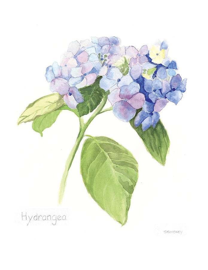 Hydrangea Painting by Susan Mahoney - Hydrangea Fine Art Prints and Posters for Sale