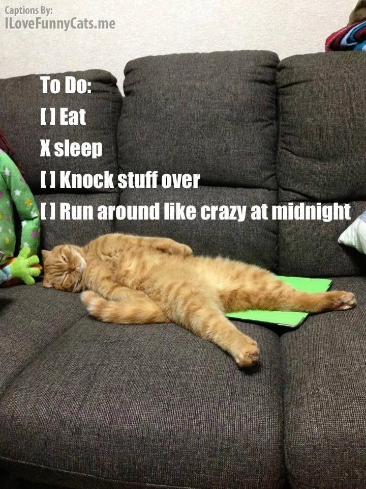 Mr. Cats 'To Do List: •Eat, x Sleep •Knock Stuff Over, •Run Around Like Crazy at Mid Night....'