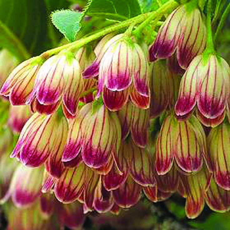 Japanese Garden Plants: Best 25+ Japanese Garden Plants Ideas On Pinterest