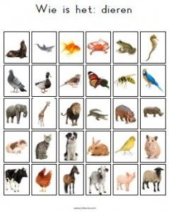Een alternatieve kaart voor het spel 'Wie is het'. Onderwerp: dieren.