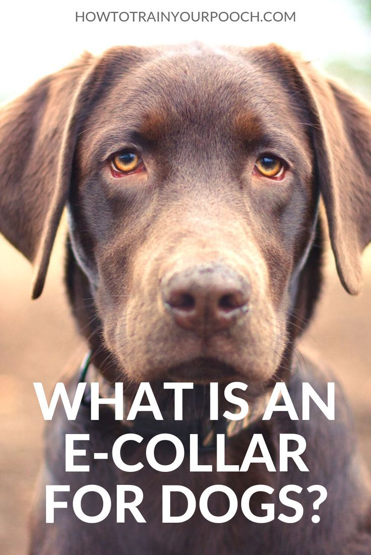 You May Have Come Across An E Collar If You Are Looking At