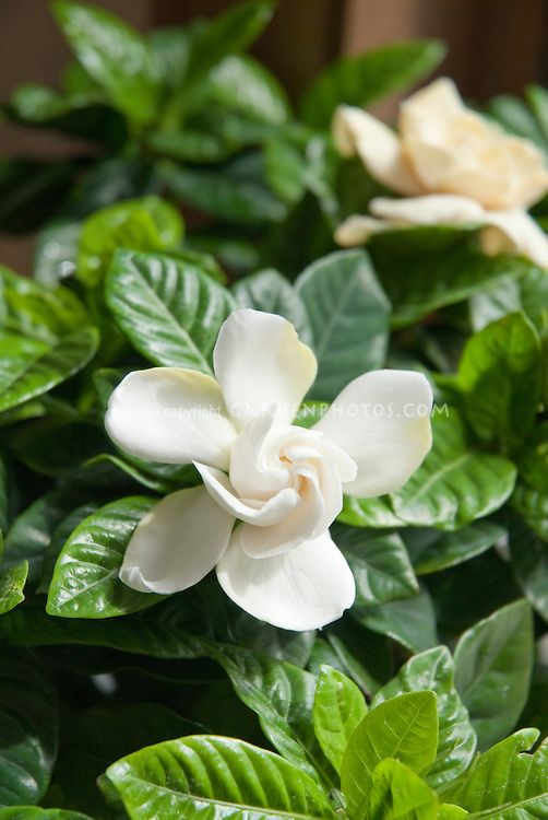 Jasmine Terrace: 5110 Best Plants I Love Or Want To Try Growing Images On