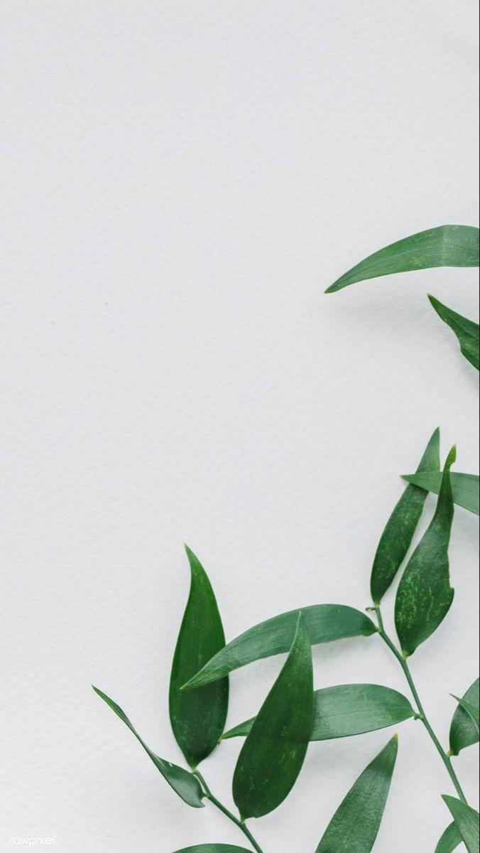 Download Premium Vector Of Gold Leatherleaf Fern Frame On White Background Zolotoj Fon Vintazhnye Cvetochnye Fony Rozovyj Eskiz