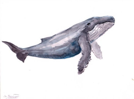 Humpback Whale, Original watercolor painting, 9 X 12 in, whale painting, whale art, blue white