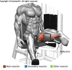 ADDUCTORS - THIGH ADDUCTOR MACHINE
