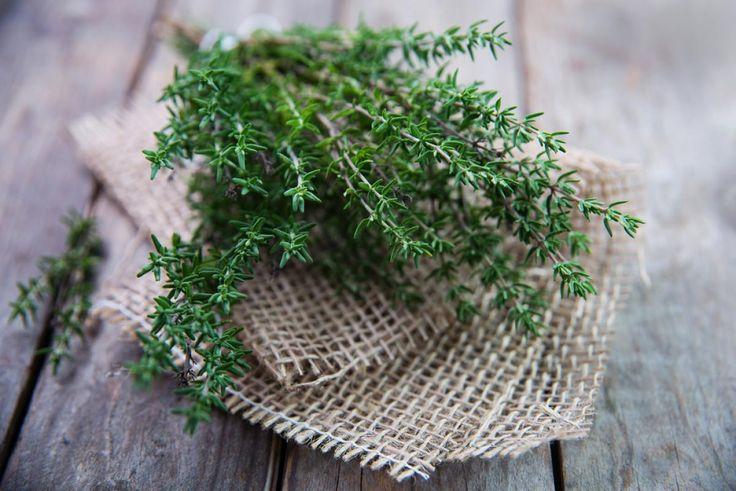 Самая сильная трава, которая активно борется с герпесом, стрептококком, гриппом и кандидозом! - Ok'ейно.mobi