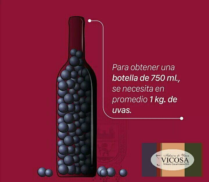 ¿Cuántas uvas se necesitan para hacer una botella de vino?