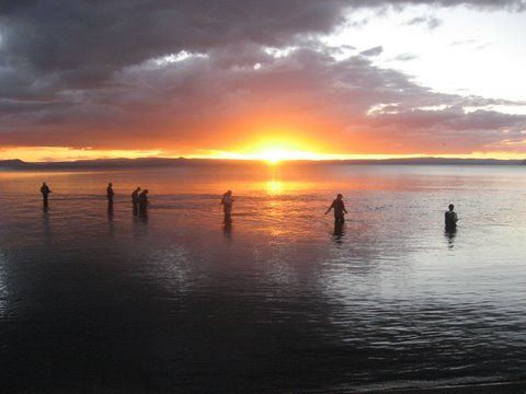 Fly fishing the Waitahanui River mouth on Lake Taupo at sunset - the line of anglers is commonly called 'the Picket Fence'. The Waitahanui is famous for big Brown trout as well as good spawning runs of Rainbow trout.