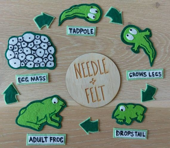 Frog Life Cycle Felt Board Kit