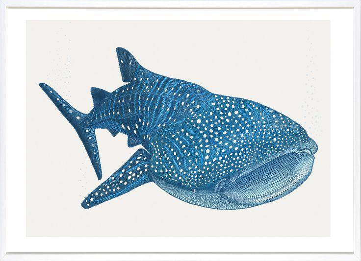 рисунок китовой акулы карандашом они английском