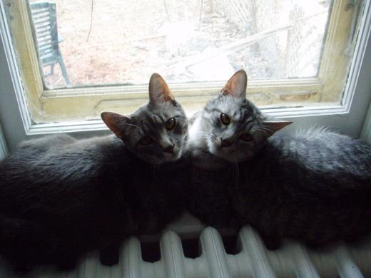 Kitties! #specialmoments