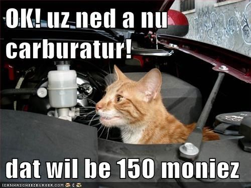 1417 best chatshumour 2 cats humor 2 images on pinterest 1417 best chatshumour 2 cats humor 2 images on pinterest funny animals animals and cats humor sciox Image collections