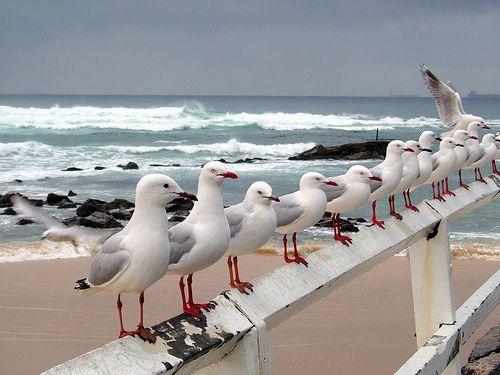 Seagulls at Nobby's Beach, Newcastle, NSW Australia | Flickr - Photo Sharing!