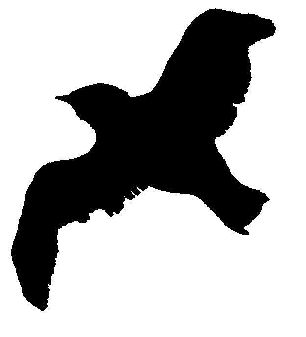 Les 25 meilleures id es de la cat gorie silhouette oiseau - Dessin oiseau en vol ...