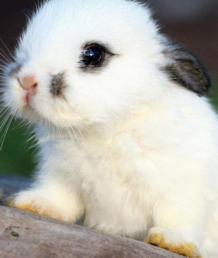 It's a little bunny