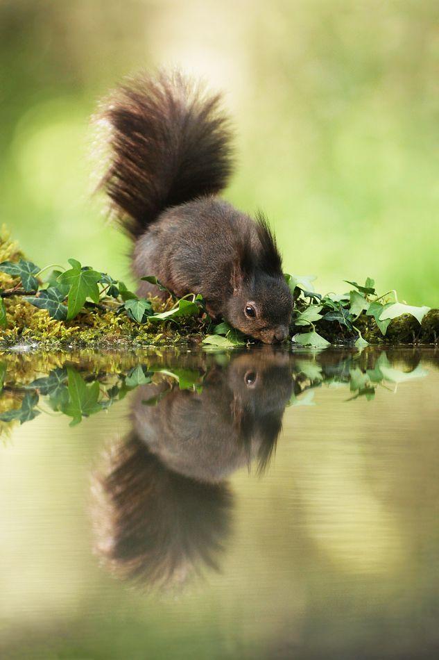 Eichhörnchen ❤                                                                                                                                                                                 Mehr