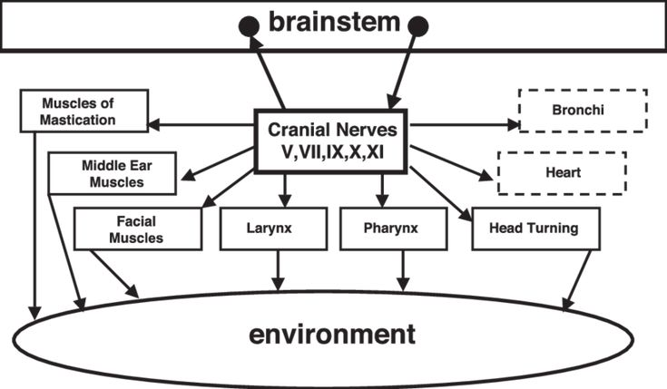Polyvagal Theory Part 2: The Stress Response — Psychology ...