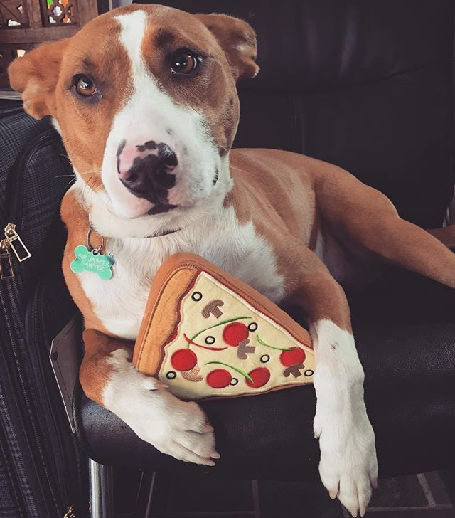 My New Years Resolution Is To Eat More Pizza Pridebites Jasperoo