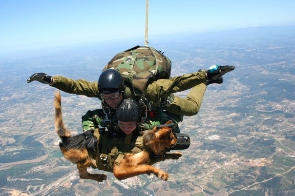 Awesome to realize what dogs will do.  uploaded from Military Working Dogs photo album