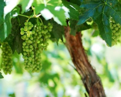 Exploring the Okanagan Valley's Wine Region